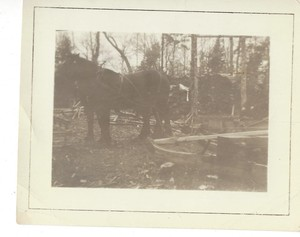 Horse drawn sled at the Cellar Rats cabin in Maine
