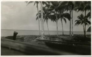 View of the shore from under coconut palms