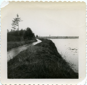 Duxbury Cranberry Company: Bog #2 with ditch on left to pump house