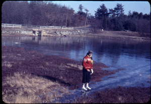 Anne Garside skating on the Duxbury Cranberry Company bog next to Franklin St., Duxbury, Mass.