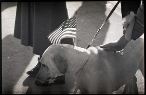 Greeting the Iran hostages at Highland Falls, N.Y.: yellow Labrador retriever with American flag