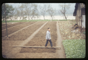 Boy waling across plank on top of garden plots