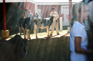 Franklin County Fair: Girl leading her Jersey cow