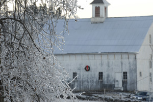 Ashfield (?) barn, decked out with a Christmas wreath, seen through ice-covered trees