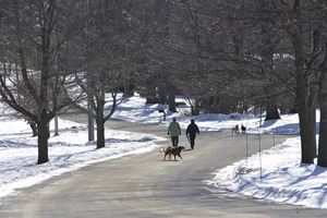 Two people walking their dogs along South Main Street, New Salem Common