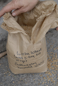 Hungry Ghost Bread: a bag of locally-grown grain (winter wheat and rye) used at the bakery