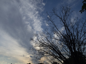 Tree in silhouette, with dramatic clouds behind, Hatfield, Mass.