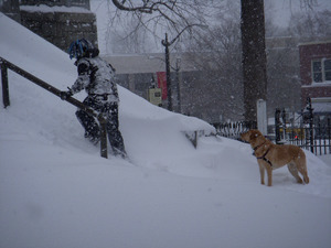 Man trudging up steps of the Hampshire County Courthouse, Northampton, Mass., through deep snow, yellow labrador retriever looking on
