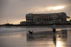 Man and two dogs walking along the beach