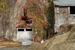 Ivy above the lower entrance to the Cow Barn