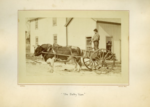 Bulley team, Massachusetts Agricultural College