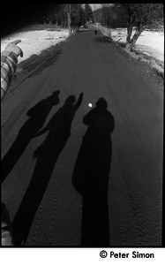 Casting shadows on a dirt road, Packer Corners commune