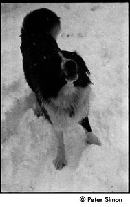 Dog in the snow, Packer Corners commune