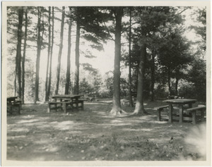 Picnic tables in the woods, Harold Parker State Forest
