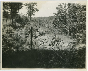 Civilian Conservation Corps in Massachusetts Photograph Collection, ca.1930-1939