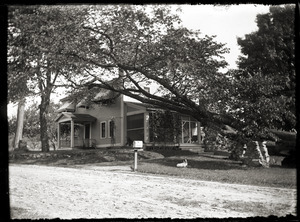 Large tree and house last owned by Emma Curtis (Greenwich Plains, Mass.)