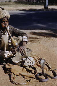 Young snake charmer in Delhi