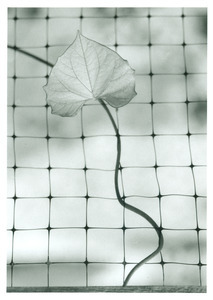 Stem entwined in netting