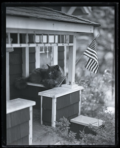 Blueboy the Persian Cat in his bungalow, with American flag flying