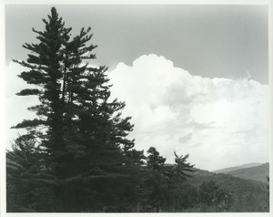 Pines and clouds