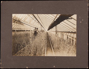 Garrison Hill Greenhouses, Dover, New Hampshire