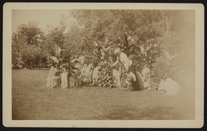 Georgiana Skillings Bangs in the fern rockery at Central Street, corner Rangeley, Winchester, Mass., undated
