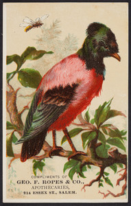 Trade card for Geo. F. Ropes & Co., apothecaries, 214 Essex Street, Salem, Mass., undated