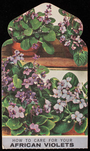 Trade card for Mahoney's, Rocky Ledge Greenhouses & Florist Shop, 210-242 Cambridge Street, Route 3, Winchester, Mass., 1958