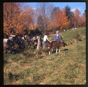 Nina Keller and her mother leading a calf into pasture, Montague Farm Commune