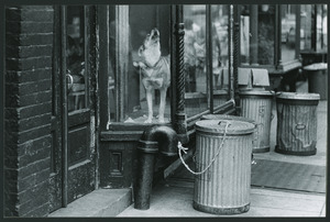 dog in New York City storefront