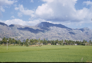 Rice paddy in South India