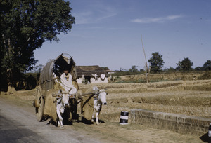 Oxcart on the road to Ranchi