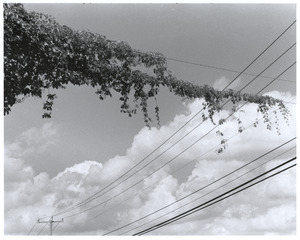 Vines on power lines