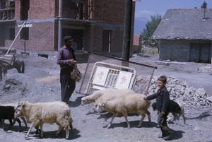 Boy and sheep in Ohrid