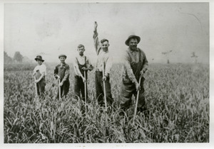 Skibiski family at work on their Sunderland Meadows onion farm: Sophie Shimko (a guest from New York), sons Michael, John, Joseph, and father Michael (l. to r.)