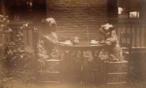 Two dogs at tea in garden