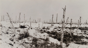 View of damaged trees in a snow covered field, Champagne
