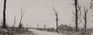 View of a road, a destroyed building and damaged trees