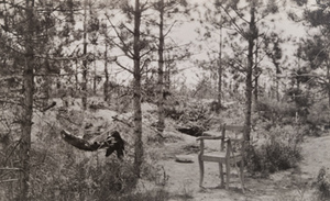 View of a chair and a hammock in front of a German dugout in the woods