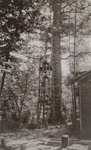 Soldiers climbing a ladder leaning against a tall tree used as an observation post by the Germans