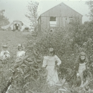 Girls in tobacco field