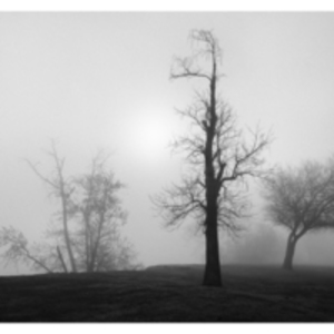 Trees and Fog, The Meadows