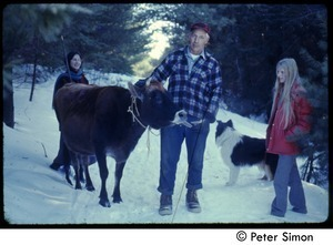 Older man and cow on a snowy road (with collie and communards), Tree Frog Farm commune