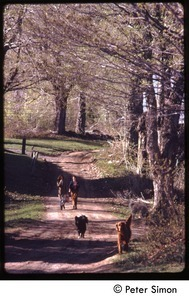 Women and two dogs walking down a dirt road, Tree Frog Farm Commune