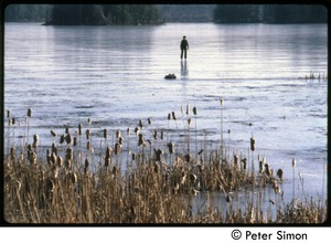 Boy skating on a frozen pond with cattails in foreground