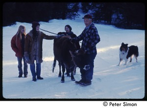 Older man with cow, collie, and commune women in the snow, Tree Frog Farm commune