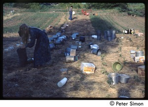 Buckets laid out in a field at harvest time, Tree Frog Farm commune