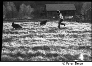 Peter Gould running through the fields with dogs, Montague Farm Commune