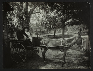 Donkey cart with Sycamore Lodge