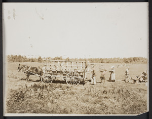 Cape Cod cranberry industry, loading the wagon with cranberries at the bog